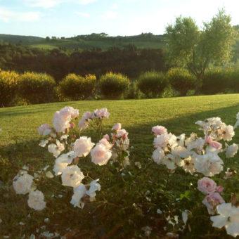 Garden of a tuscan villa