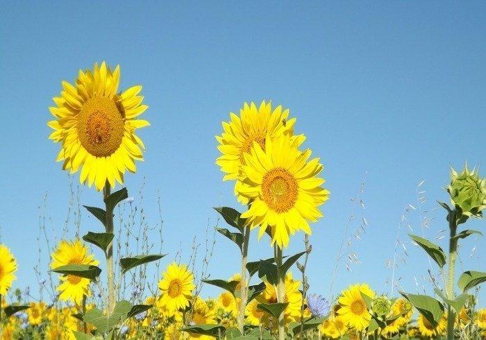 summer resized - La Marronaia -