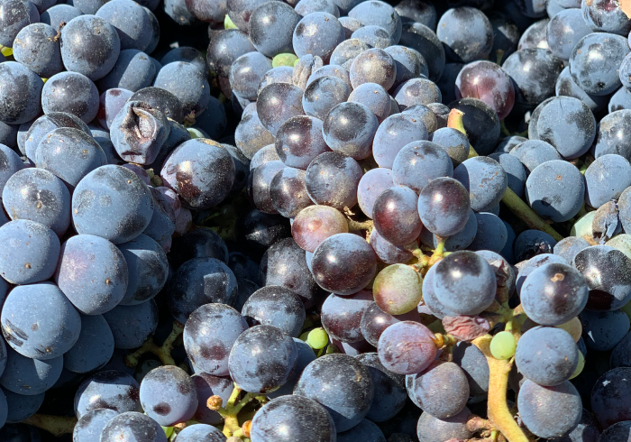 wine tour 13 - La Marronaia -