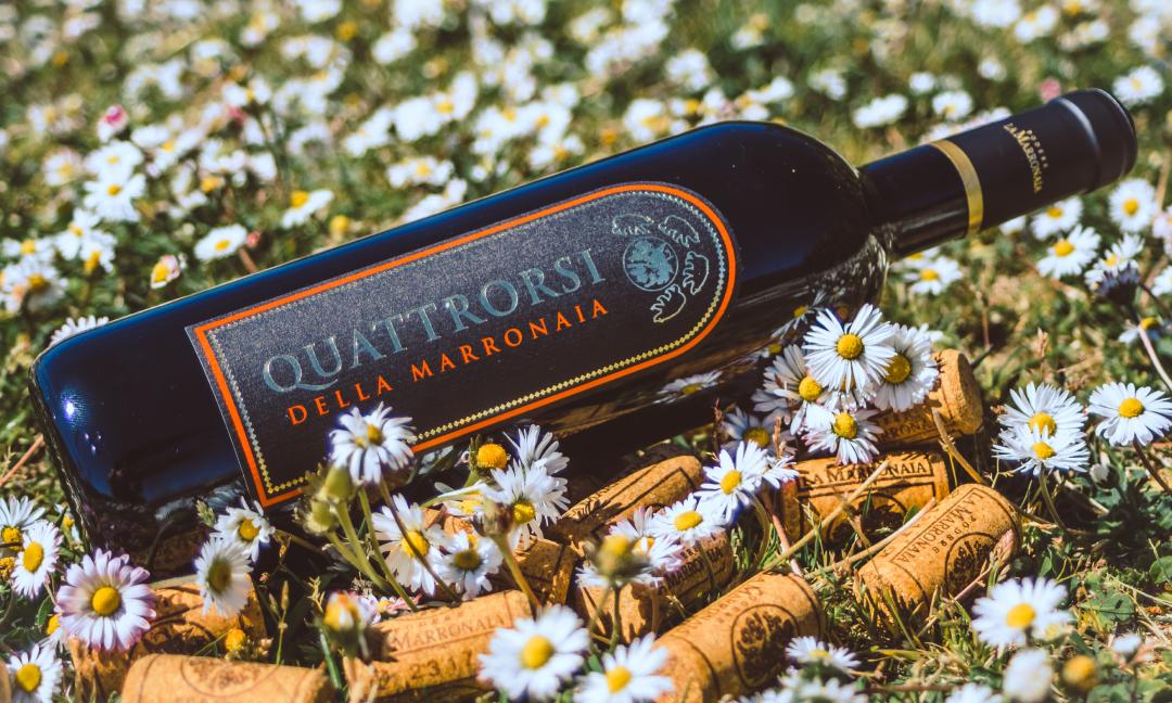 quattrorsi-supertuscan-la-marronaia-winery